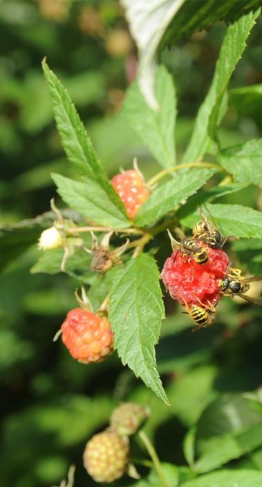 biologische landbouw op voedselbos