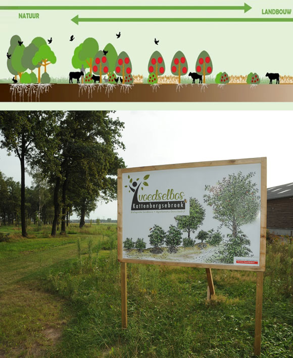 agroforestry nederland
