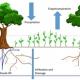 het nut van bomen in een voedselbos