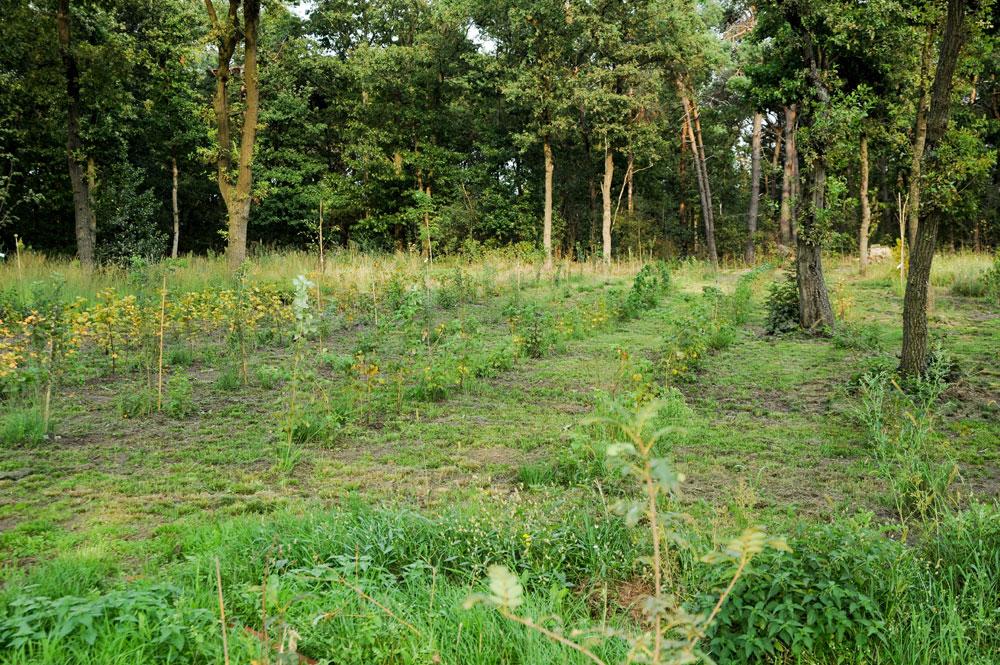 hoe leg je een voedselbos aan