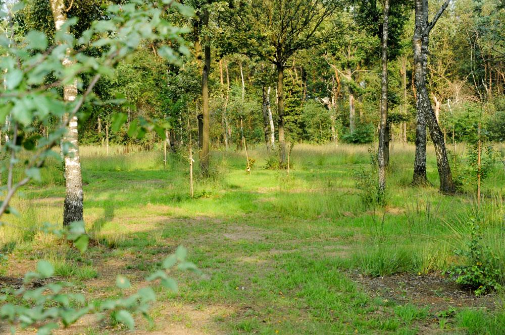 voedselbos aanplanten