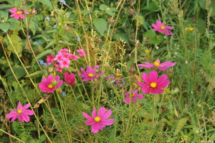 voedselbos bloemen