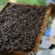 bijennest voedselbos eindhoven